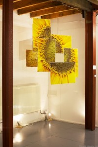 Sunflower installation